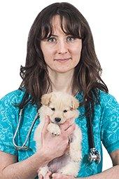Ветеринарный врач скорой помощи