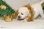Скоро-скоро Новый год! Фото прислала Светлана Филимонова