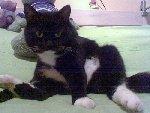 Развратная кошка Джишка  Фото прислал hitman