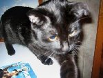 Голубоглазый кот Фото прислала Анютка