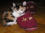 Пока я маленькая, будешь моим домиком Фото прислала Людмила Глумакова г. Краснодар