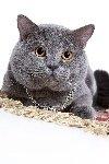 Кот Лёлик. Фото пришло от Eunia