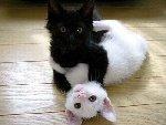 Кошки Фото прислала Л П