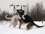 Игры в снегу Фото: Мицкявичюте Алиса.  Прислала: Надежда Хрипунова.