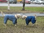 "Два диназаврика - муж и жена одна ""сатона"" Фото прислала Абясова Галина"
