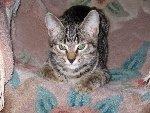 Котик Сенька. Фото прислала Нина