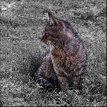 Кошка на газоне Фото: Мочалов Артём