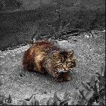Бродячий кот в Коломне Фото: Мочалов Артём