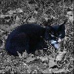 Бродячий кот в Барвихе Фото: Мочалов Артём