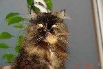 Кошка БАСЯ.   Фото прислал: Сергей Тюрин.