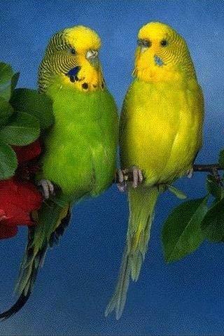 Фото птиц.  Предыдущая.  Фотография из альбома.