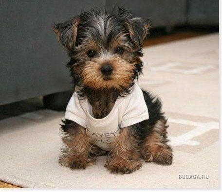 хочу себе маленькую собачку.