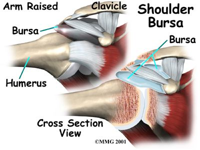 bursa.  A. is located between the acromion and the rotator cuff tendons.