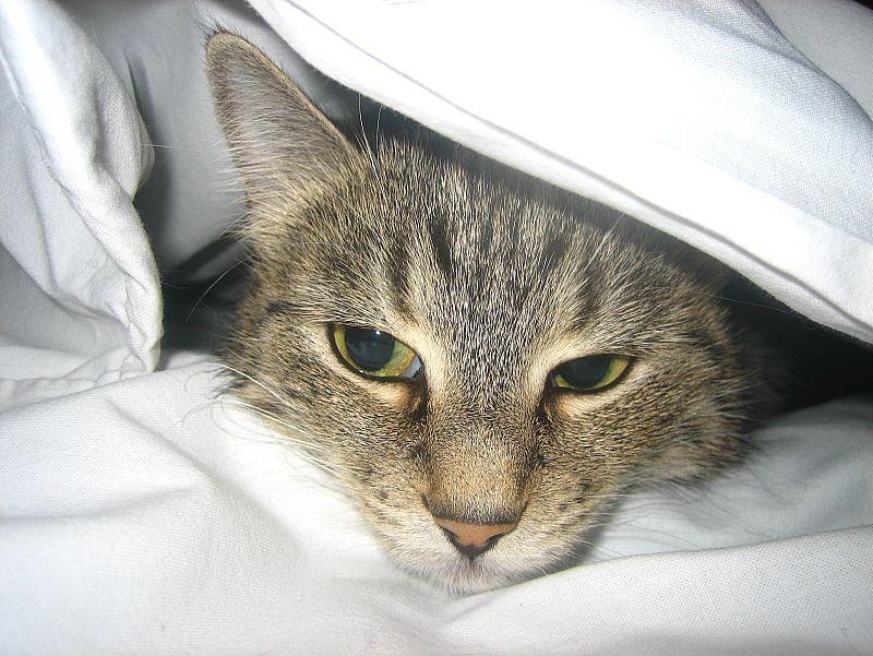 Наиболее распространенные болезни кошек, описание, отзывы, способы лечения. - Ветеринарная Аптека, Зоомагазин, Зоотовары - Купит