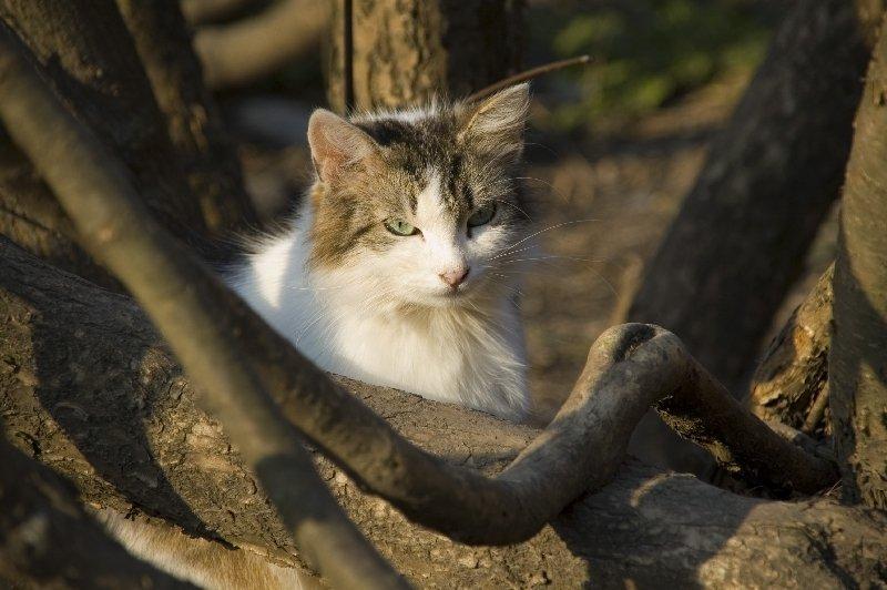Кошка в городе Боровск. Снято весной 2007 года.