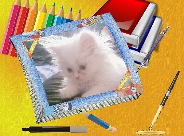 Котик породы Перс.7 недель,голубоглазый,глухой,очень любим