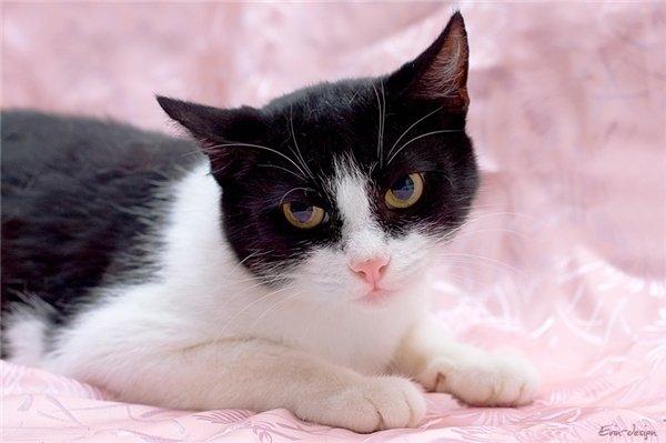 Гречка Индепендент -вот она, загадочная русская душа, с необъяснимым достоинством и независимостью даже в крошке-кошке.