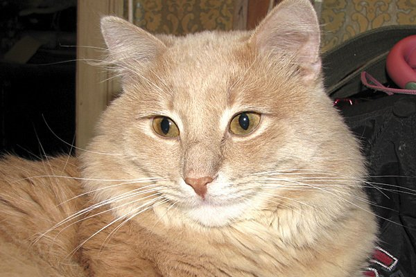 Дзен кот. В миру-Фунт.