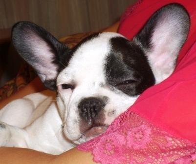 Спи собачка сладко-сладко