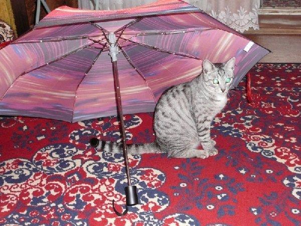 Я дождика не боюсь!