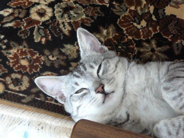 Барсёнок спит