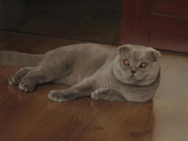 мой кот Бася