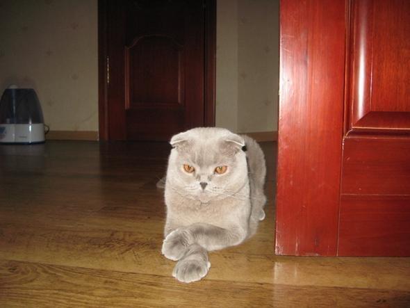 котик задумался....