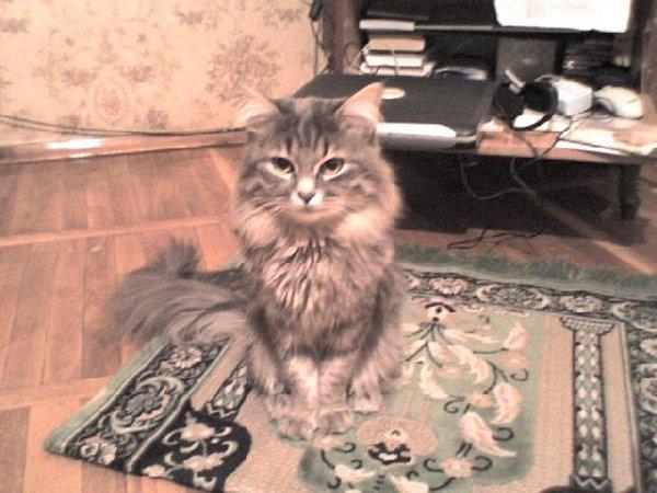 ...Самый послушный котик в мире))))))