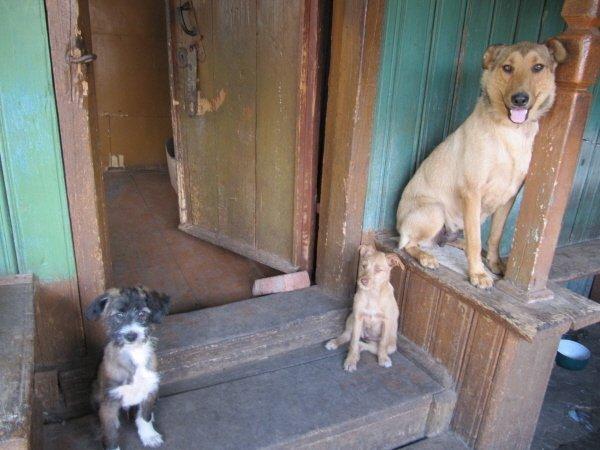 наш общий дом для щенков, собачат и котят..Им вместе веселее во сто крат:)