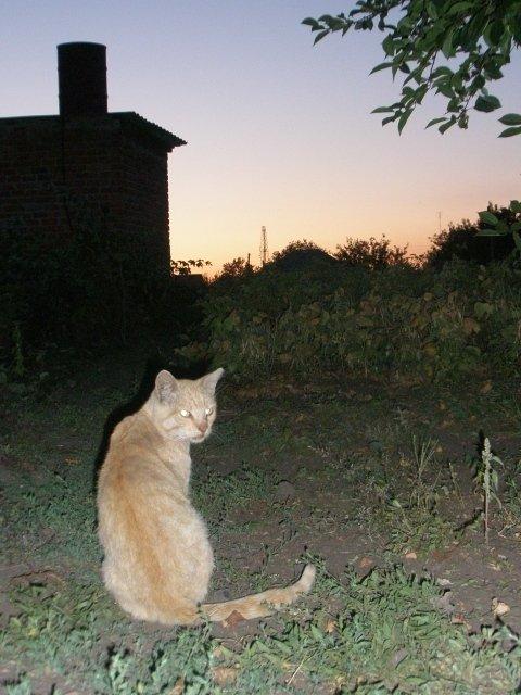 Закат и я АПЕЛЬСИН
