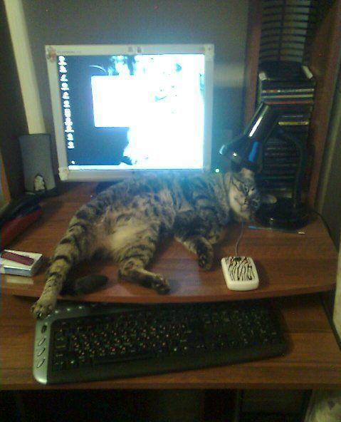 ...кот Василий много работает... надо отдохнуть.