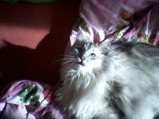 Мой кот Миша