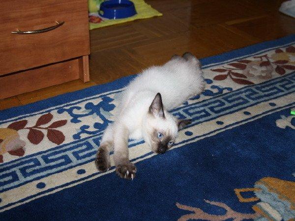 Наш малыш Сёма! первый день дома