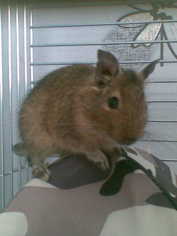 Наша кусачая, но любимая Фенечка в своем убежище - на крыше домика.