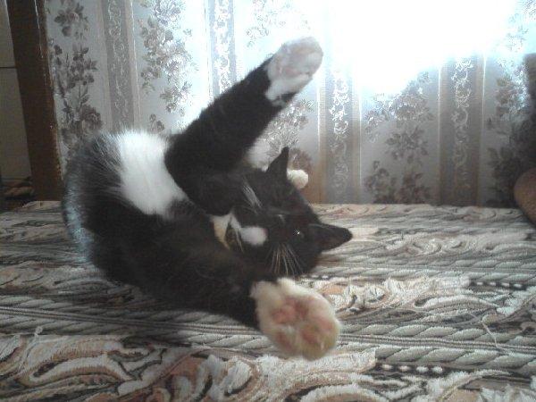 "Это моя кошка-Маська. \""Улееетаааю!\"""