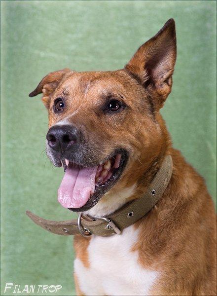 супер пес- Везунчик Сэм: из руин Туарега, через пламя, через боль собачьего ада-  к надежде и любви