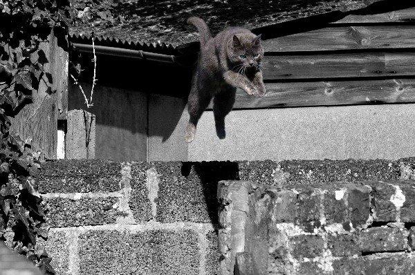 Прыжок через пропасть