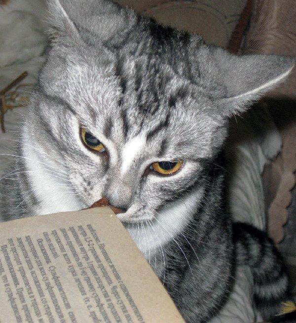 Буду книжки я читать, чтоб скорей ученой стать!