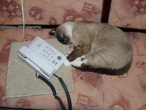 Позвони мне, позвони!