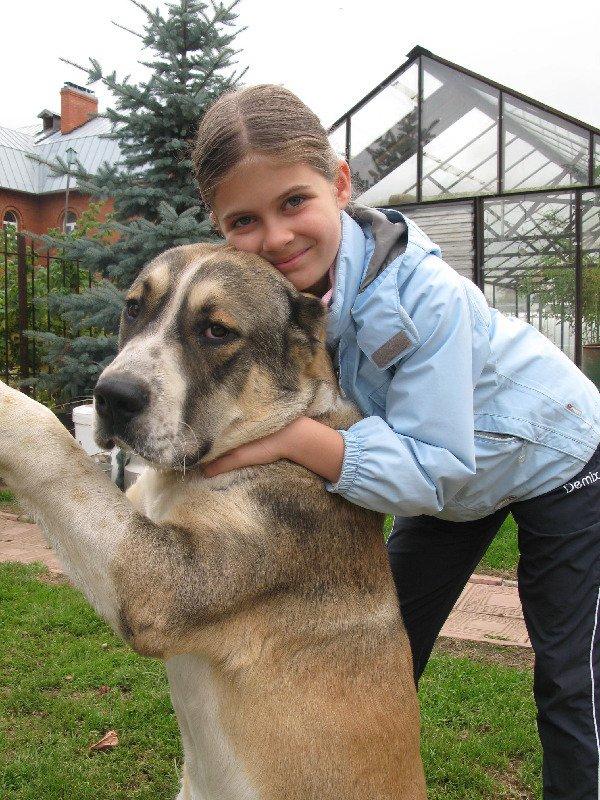 любимый пёс Икар