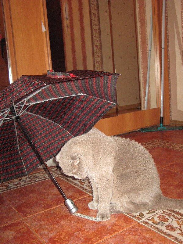 Бася в раздумьях: идти в такой дождь или дома остаться?
