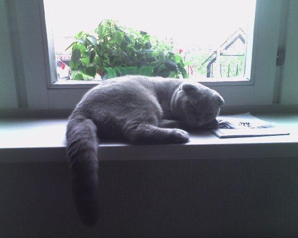 опять за чтением заснул