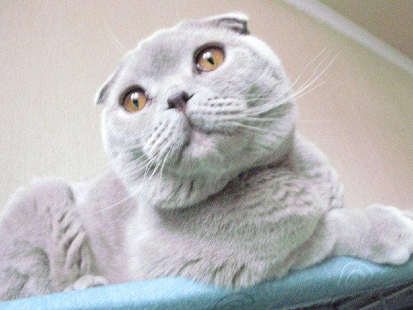 котик крупным планом