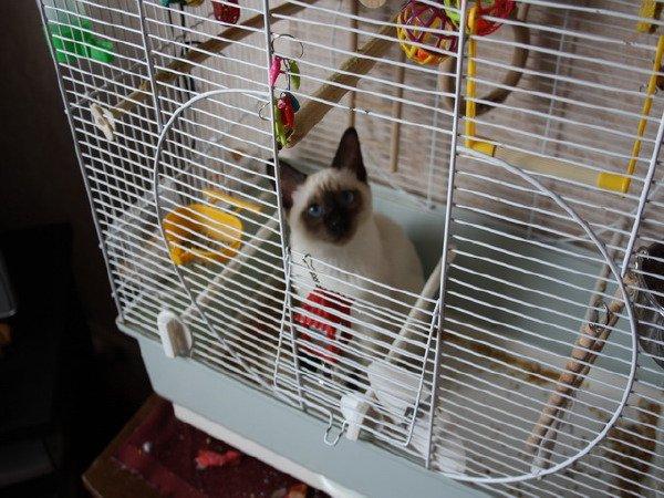 мы его еле вытащили из клетки - понравилось ему там сидеть!