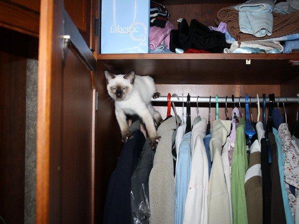 Кто там в шкафу