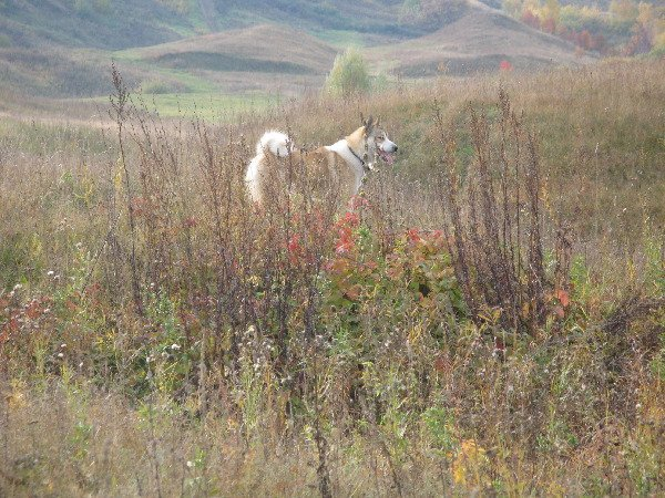 Жулька замаскировался в осенней траве