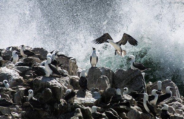 Peru, Paracas - Salvarse 2