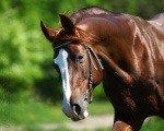 """Фото моей знакомой по конному спорту - \\\""""Фефа Королева\\\"""""""
