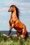 "Фото с сайта моей знакомой по конному спорту - \\\""Фефа Королева\\\"""