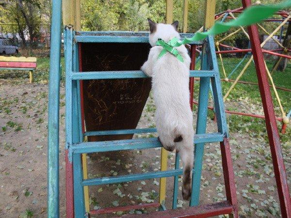 котята тоже любят кататься на горке (кстате сам залез)
